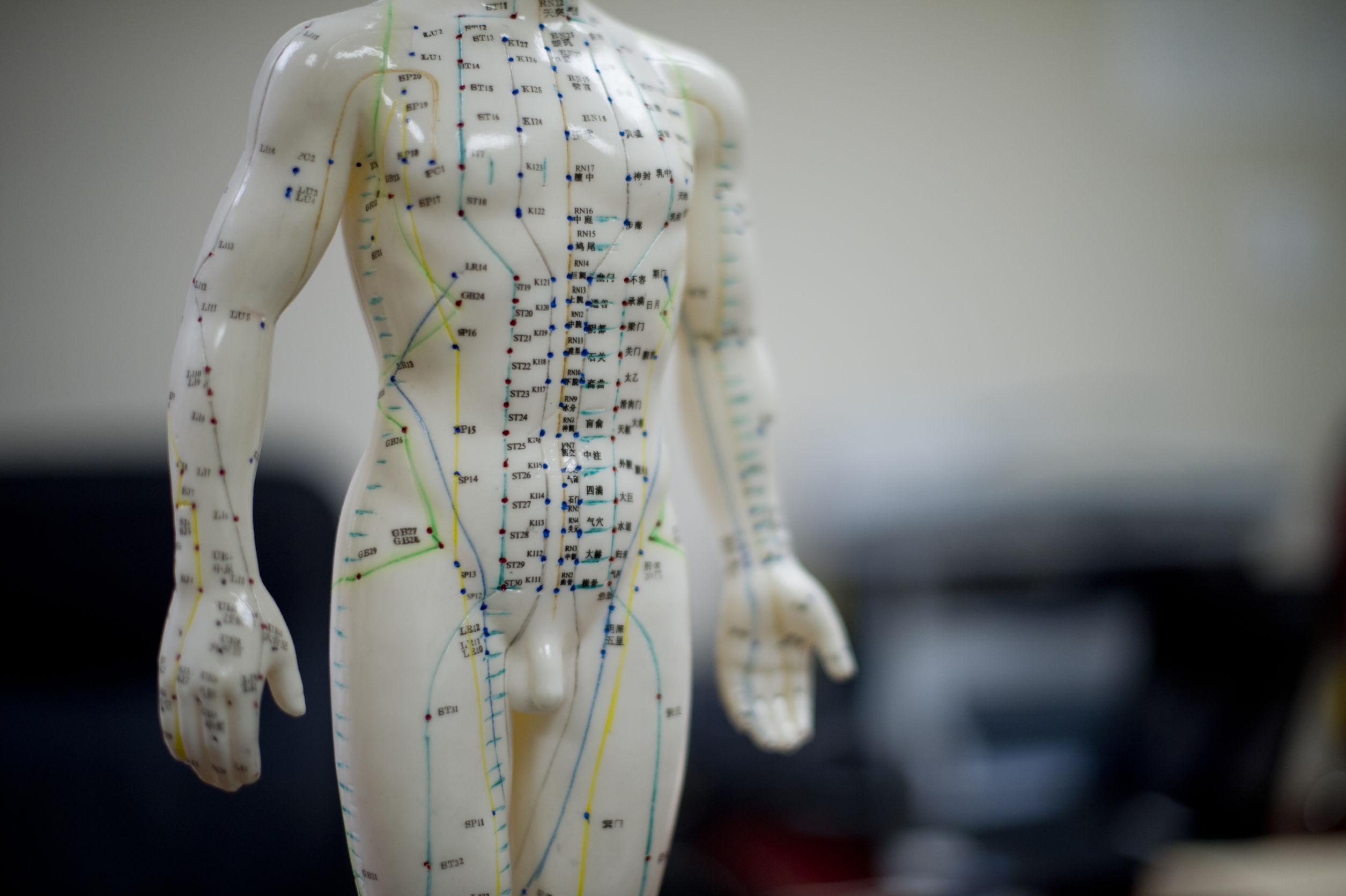 Biokinesiologie Voor Gevorderden – Driebergen-Zeist