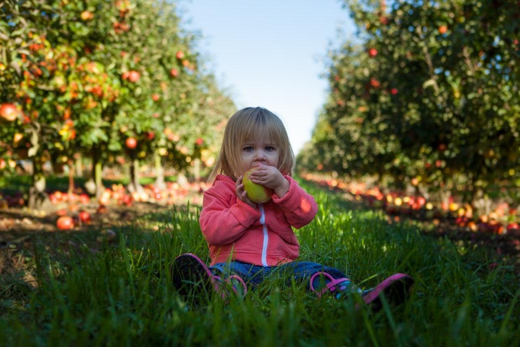 Welkin | Jaartraject 'Voeding En Gezondheid' – Montfoort